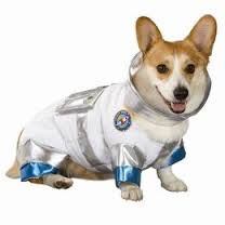 dog ast